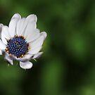 Blue flower by CoffeeBreak