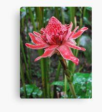 Torch Ginger (Costa Rica) Canvas Print