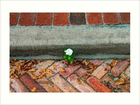 Flower on the Brick Road by Kelushan