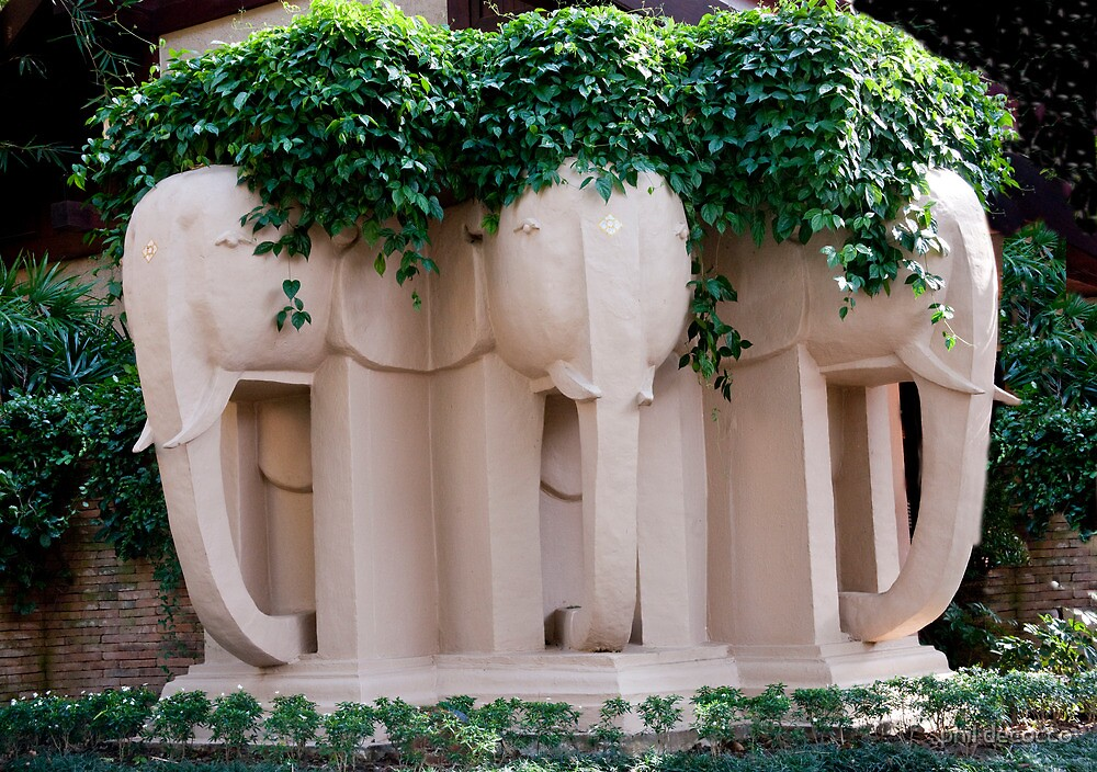 Elephants of Chiang Mai by phil decocco