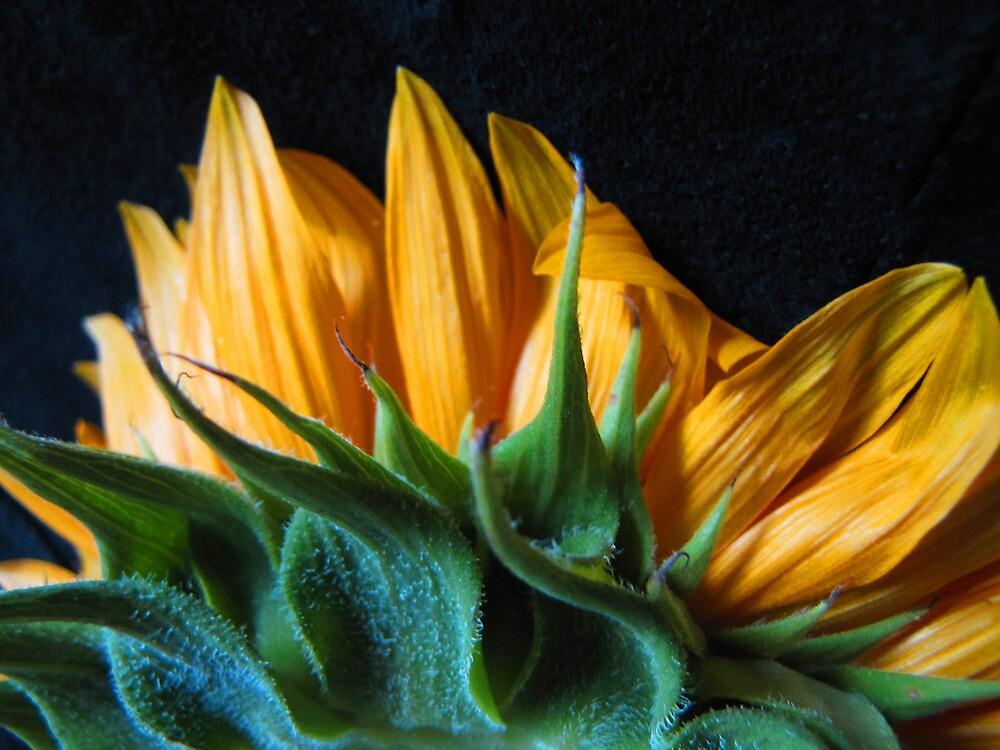 Backside Sunflower by Mistyarts