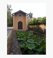 ...NINFEE  A  PARMA .....ITALY - EUROPA - MONDO - Photographic Print