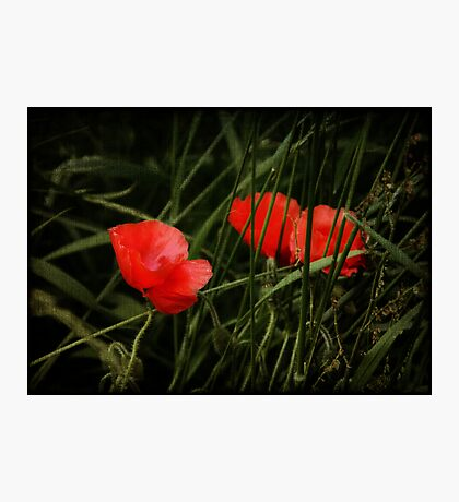 Night Poppies Photographic Print