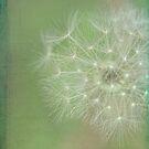 Make a wish by Karen  Betts