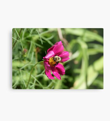 "Bumble Bee 2 ""lunch break"" Metal Print"