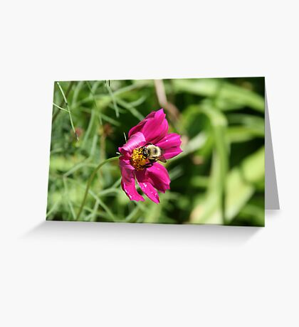 """Bumble Bee 2 """"lunch break"""" Greeting Card"""