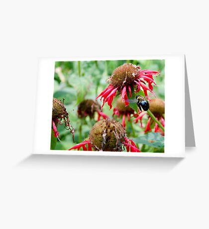 "Bumble Bee 3 ""slim pickings"" Greeting Card"