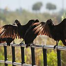 Black Vultures Drying Their Wings In The Everglades by ArtThatSmiles