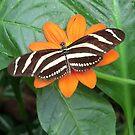 Butterfly 1. by Meladana