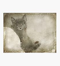 Kitty Art Photographic Print