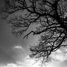 Tree Silhouette #7 by David Hawkins-Weeks