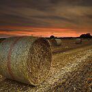 Field Of Dreams by Brian Kerr