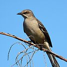 Mommas Gonna Buy You A Mockingbird by naturalnomad