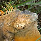 Male Iguana (Costa Rica) by IngramImagery