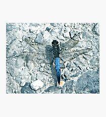 Powder Blue Dragon(fly) - Lodmoor Reserve Weymouth Photographic Print