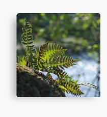 Lakeside Ferns Canvas Print