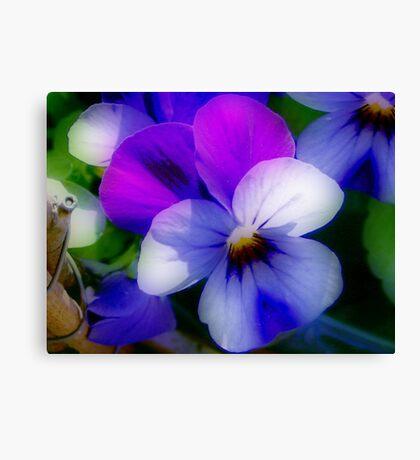Violet  Colors Canvas Print