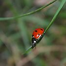Spotted in the Grass by Luci Mahon