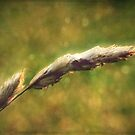 Summer: Grass in the Wind I by Sybille Sterk