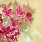 Vintage Hyacinth by Margi