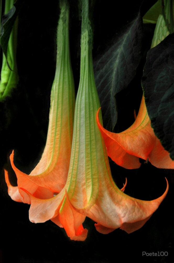 Angles' trumpets by Poete100
