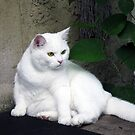 Fluffy fat amazing cat. by queenxtc