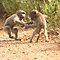 """""""Stop monkey around"""""""