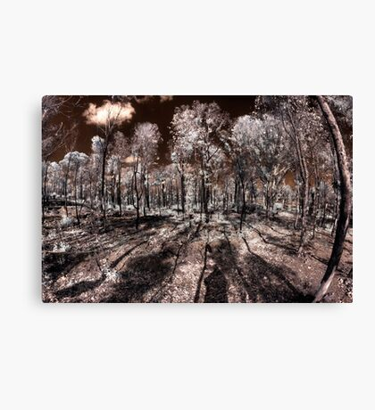 Burnt Forest regrowth Canvas Print