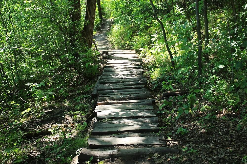 Hiking Trail Through a Forest by rhamm