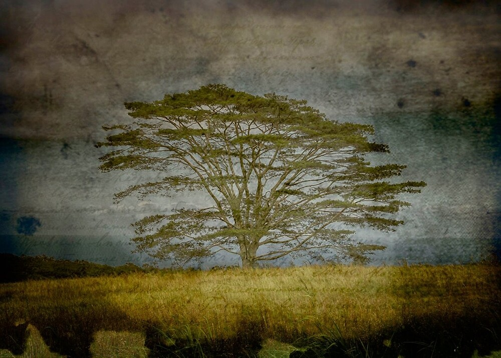 Big Tree, Big Island (texture) by Edith Reynolds
