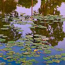 lilypads by Barry W  King