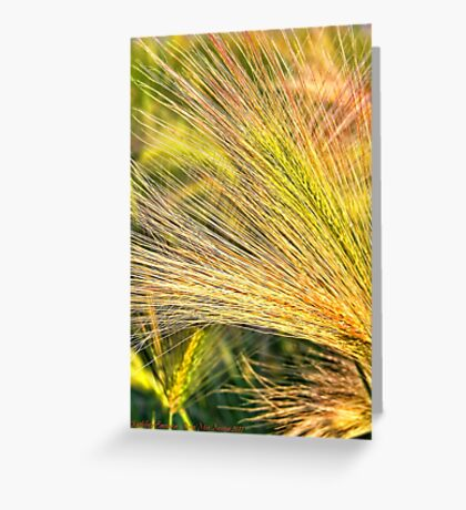 Foxtails 2 Greeting Card