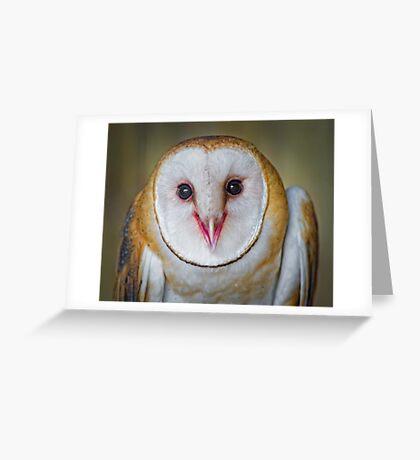 Cute Barn Owl  Greeting Card