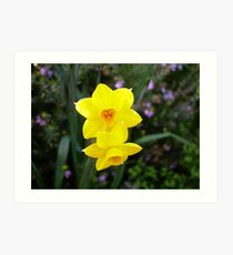 'JUST THE TWO OF US!' Jonquils Soleil d'or. Art Print