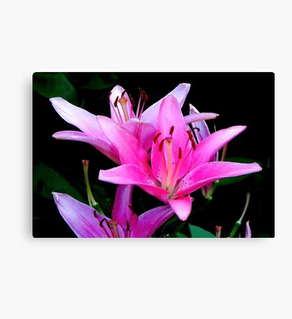 Pretty in Pink!!! © Canvas Print