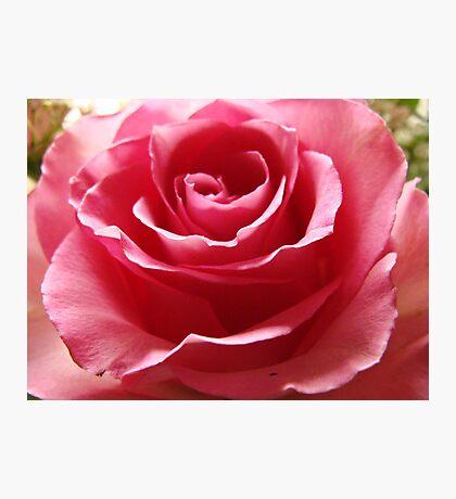 pink petals of perfection Fotodruck