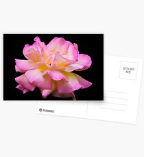 Blushing Beauty Postcards