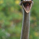 Ostrich by Gregory L. Nance