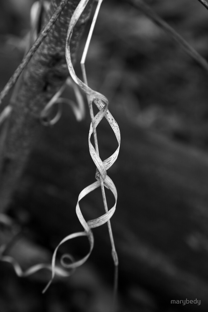Forest Ribbon BW by marybedy