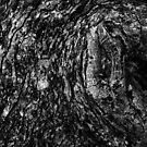 B&W Abstract Tree Bark... by Biren Brahmbhatt