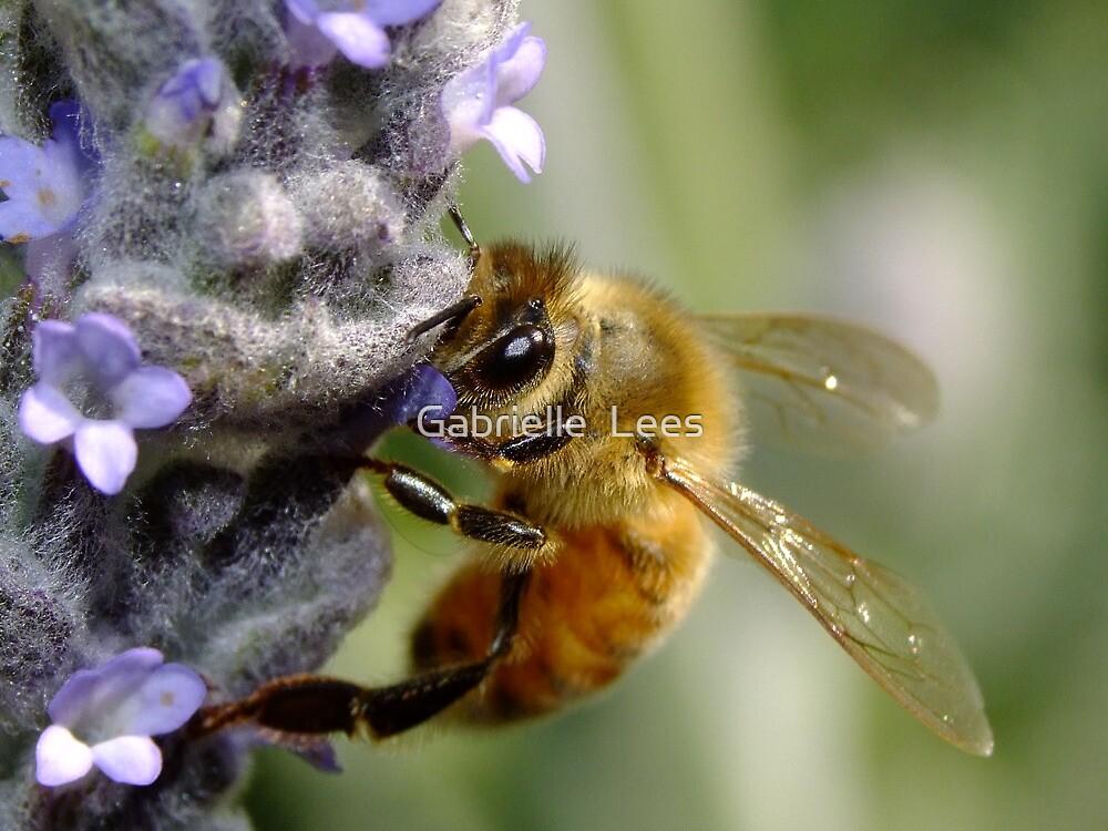 Bee My Honey Bee by Gabrielle  Lees