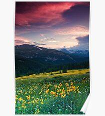 Alpine Sunflower Meadows Poster