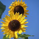 sunny by brucemlong