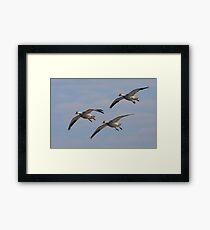 Snow Geese Trio Framed Print