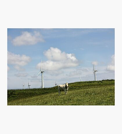 Cow in a Field Photographic Print