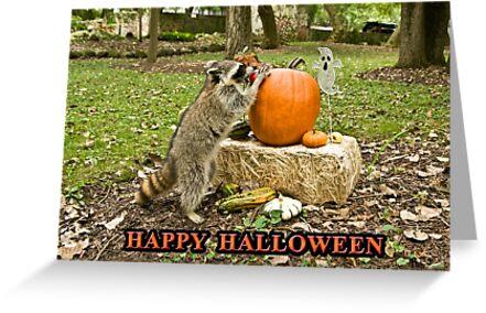 Raccoon Halloween by jkartlife
