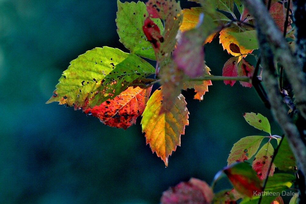 The Colours of Early Autumn by Kathleen Daley