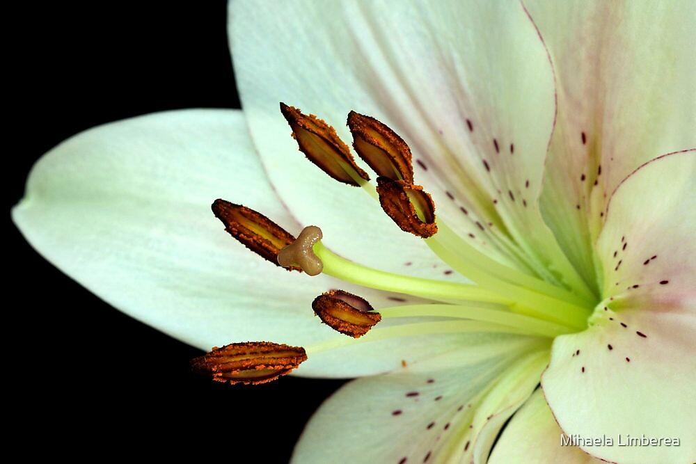 White Lily III by Mihaela Limberea
