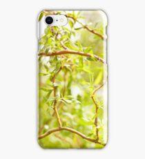 Willow Salix Alba tree detail iPhone Case/Skin