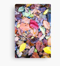autumn paint Canvas Print